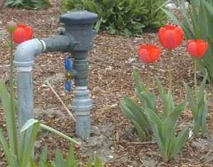 Tulips beside pipe