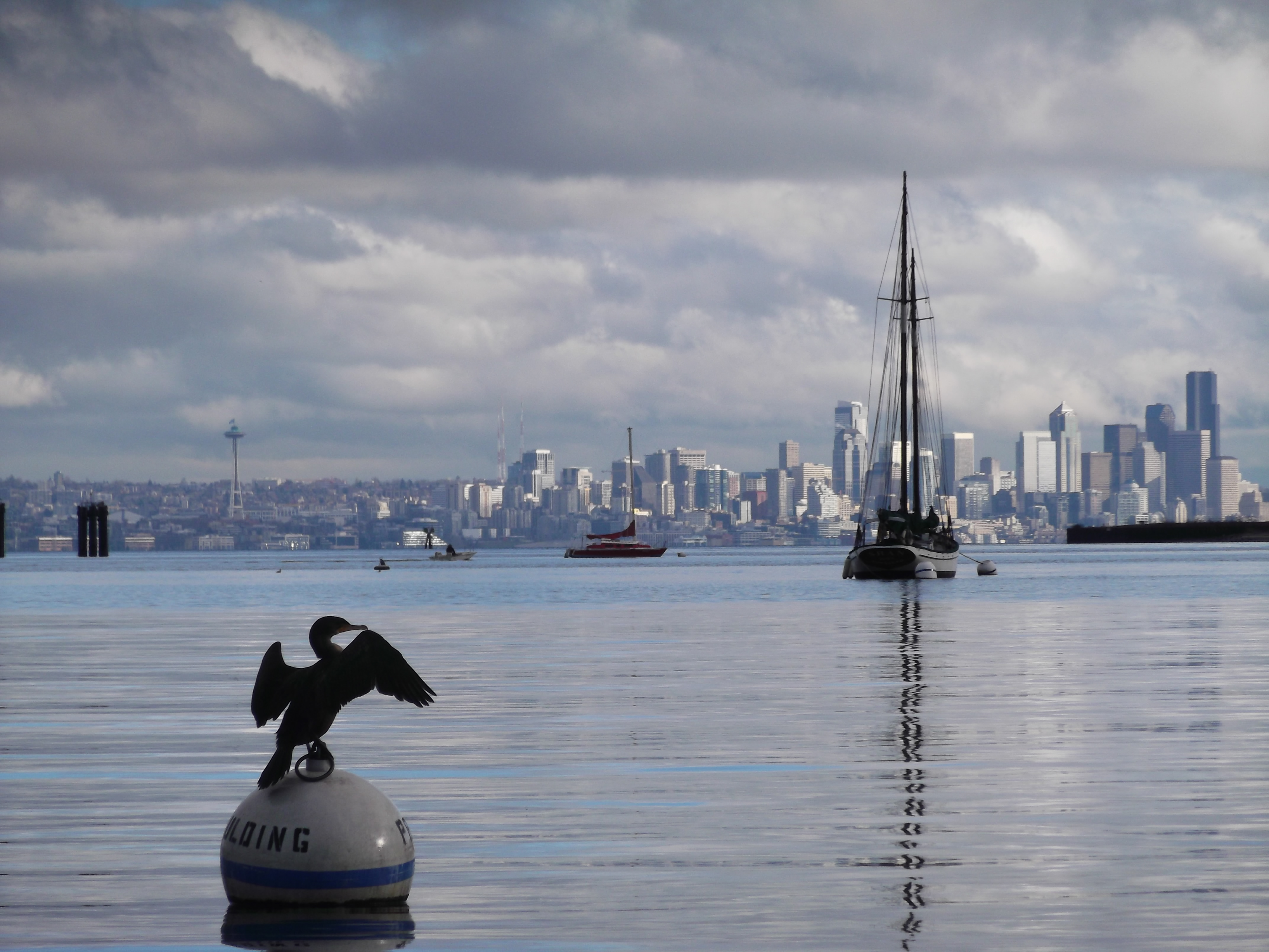 cormorant on buoy- picture for web page